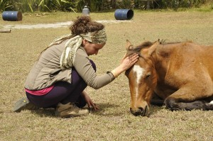 Mysachaji horse assisted therapy